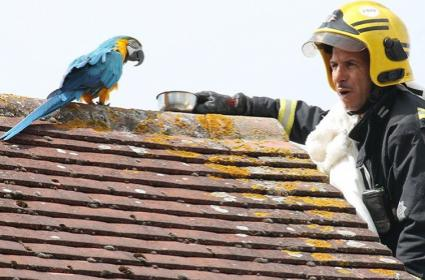 Parrot Scolds Firefighter Trying To Rescue Her - Sakshi