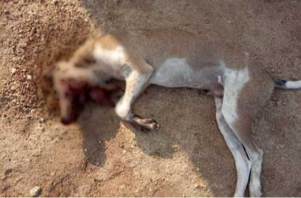 Country Bomb Kills Stray Dog In Suryapet - Sakshi