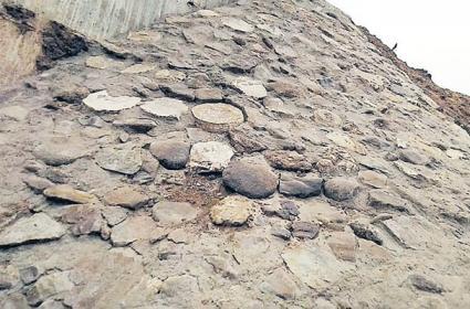 Ancient Dinosaur Fossils Found In Mancherial - Sakshi