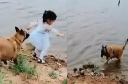 Dog Saves A Little Girl From Falling Into Water - Sakshi
