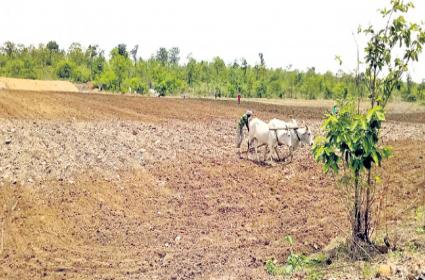 Non Tribals Podu Cultivation In Tribal Areas - Sakshi
