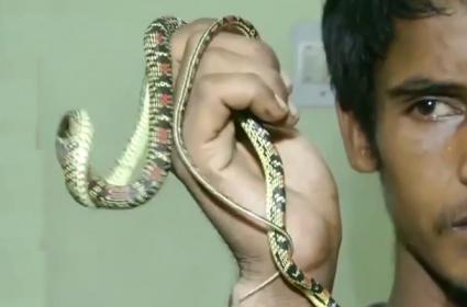 Flying Snake Seized In Bhubaneswar - Sakshi