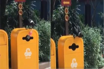 Crow Becomes Internet Hero After Throws Empty Bottle In Dustbin - Sakshi