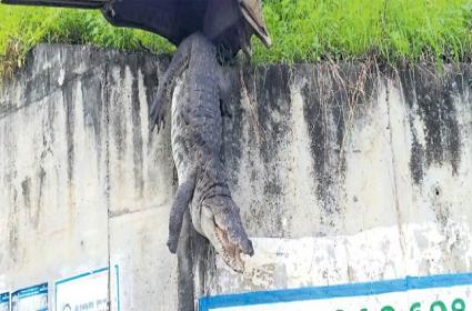 Crocodile Stuck Over Bridge In Nizamabad - Sakshi