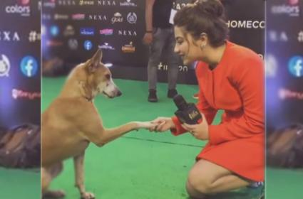 Actress Aditi Bhatia Interviews Dog In IIFA Awards - Sakshi