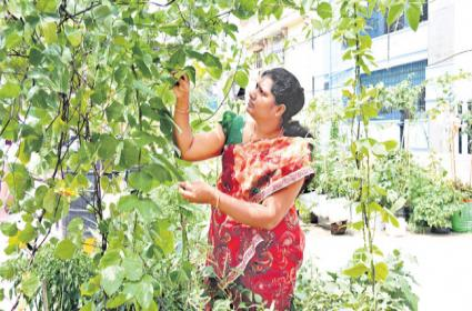 Sujani Reddy is Growing a Variety Of Greens At The Eden Garden in Hyderabad - Sakshi