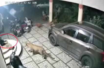Leopard Pounces On Dog Outside House In Gujarat - Sakshi