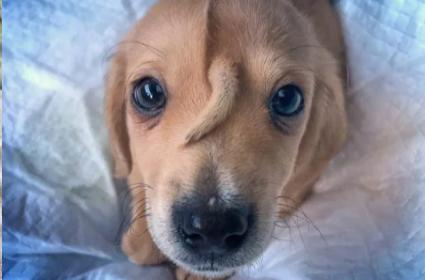 This Rescue Puppy Name Is Narwhal With Tail Growing On His Forehead - Sakshi