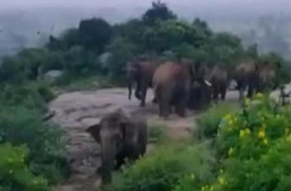 Elephants on the rampage in Kuppam - Sakshi