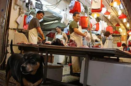 corona virus Shenzhen bans eating of cats and dogs permanently  - Sakshi