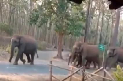 Video Of Elephant Family Crossing Road Goes Viral - Sakshi