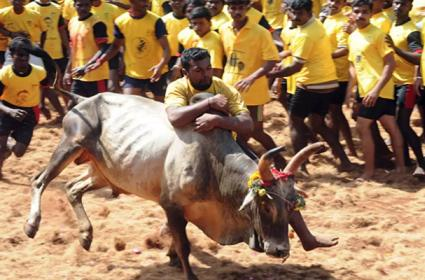 Man Eliminated In Jallikattu Fight In Tamilnadu - Sakshi