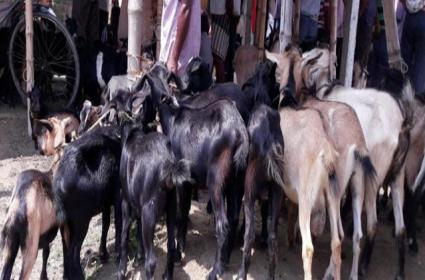 Mutton Sales Increases In Hyderabad Said Mehar Survey - Sakshi