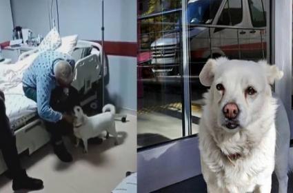 Dog Waited For 6 Day In Front Of Hospital For Its Owner - Sakshi