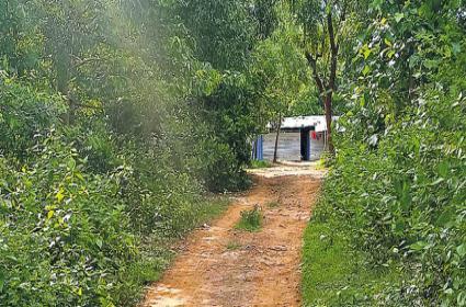 TDP Leaders In Simhadri Appanna Swamy Temple Lands - Sakshi