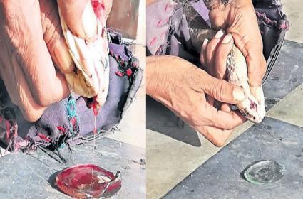 AP: One Litre Of Snake Venom Price Is 40 Lakh Rupees - Sakshi