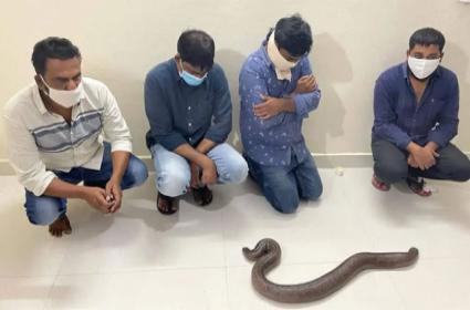 2 Headed Snake Gang Arrested By Forest Department Vigilance Unit In HYD - Sakshi