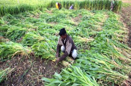 UP Farmer Cultivated Bamboo Plants And Earns More Than Rs 17 Lakhs Over 7 Years - Sakshi