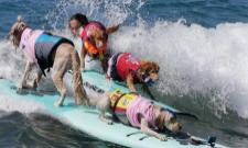 dogs Surf Competition