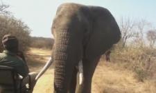 Elephant comes too close.. a man struck like a statue