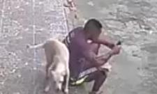 street dog marking his territory
