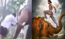 Baahubali Stunt Goes Wrong : Youth Injuried by Elephent - Sakshi