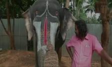 Elephant plays mouth organ in TamilNadus Thekkampatti - Sakshi