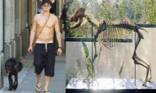 Orlando Bloom Mounted His Dog Skeleton At Home - Sakshi