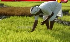 Nizamabad Farmer New Innovative Idea In Agriculture