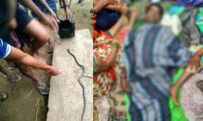 Venomous Snake Bites Three Members In A Family In Mahabubabad - Sakshi