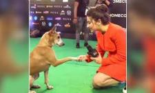 Dog Attends IIFA Awards & Gives Interview