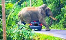 Watch Video,Elephant Sits On Car Narrow Escape For Tourists Inside - Sakshi