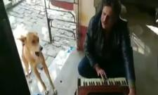 Viral Video: Dog Sings Teri Meri Kahaani Song Along With Man - Sakshi