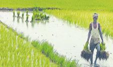 Cabinet Approves Changes In Pradhan Mantri Fasal BimaYojana scheme - Sakshi