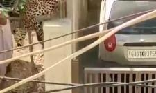 Viral Video Of Leopard Enters Residential Area Creates Panic In Gujarat