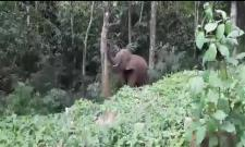 Elephant Climbs a Tree And Pluck Jackfruit Viral Video
