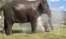 Elephants enjoying evening bath goes viral