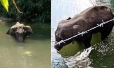 Kerala Police Take Custody On Man On Elephant Death - Sakshi
