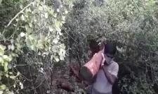 Once Again Smugglers Are safari In Seshachalam Hills Video