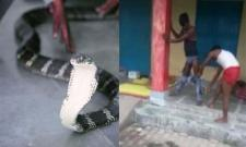 Watch: Snake Enters In Pant In Uttar Pradesh - Sakshi