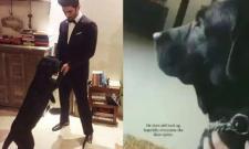 Sushant Singh Rajput Dog Fudge Heartbreaking Video - Sakshi