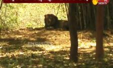 Visakha Zoo Closed Due To Covid