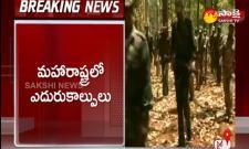 8 maoists death in maharashtra firing