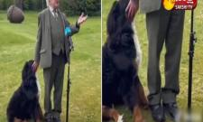 Ireland President Michael D Higgins Dog