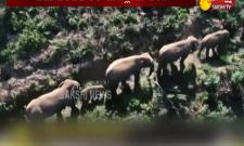 special story on china elephants long march