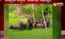 Elephant Poaching in Chittoor District