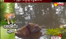 Tigers Comes On Roads In Komurambeem Distric