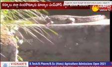 Crocodile Fear At Nandikotkur Pump House