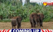 Elephants Hulchul In Kallikota Village Vizianagaram District