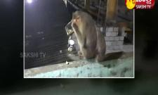 Viral Video: Monkey Drinking Alcohol At Wine Shop